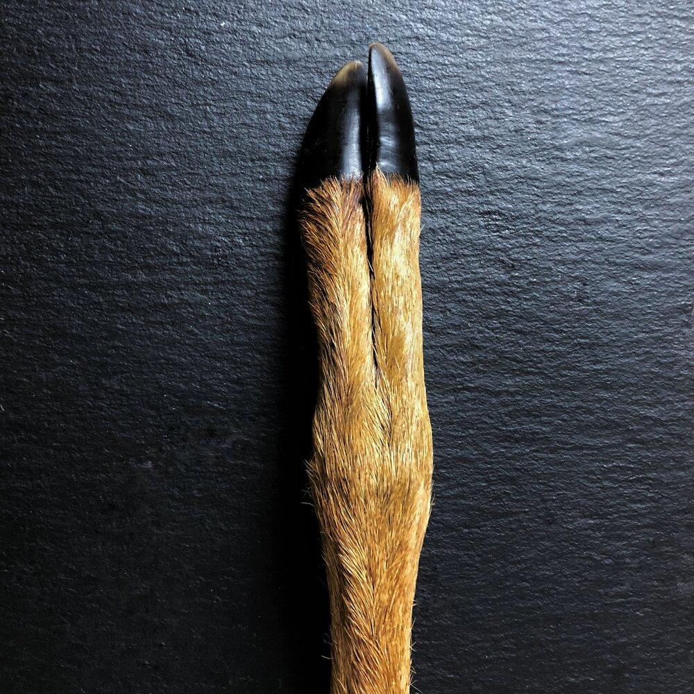 hairy deer leg
